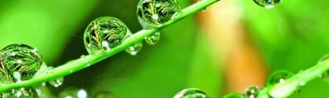 Bio-based resins
